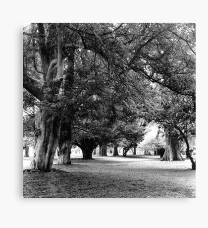 Phoenix Park Trees, Dublin Canvas Print