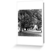 Phoenix Park Trees, Dublin Greeting Card