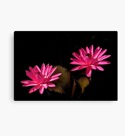 Two Red Waterlilies Canvas Print