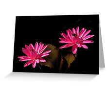 Two Red Waterlilies Greeting Card
