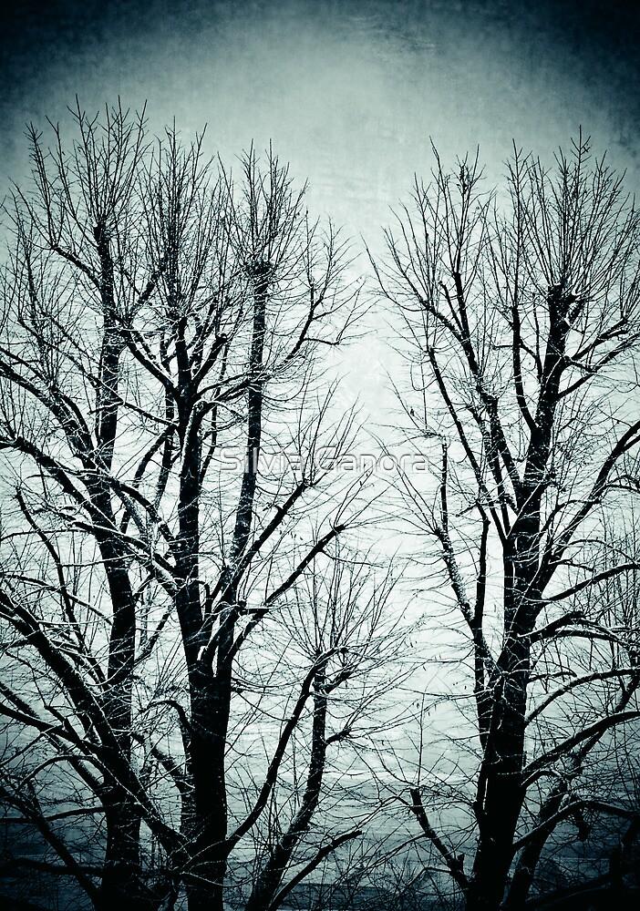 Winter trees II by Silvia Ganora
