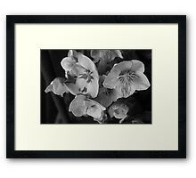 Monochrome orchids Framed Print