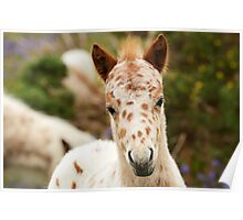 Spotted Pony Foal Poster