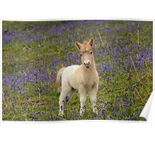 Bluebells and Foal Poster