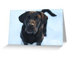 Snow puppy Greeting Card