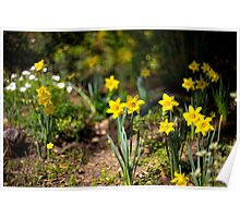O fateful flower beside the rill-- The Daffodil, the daffodil!  —Jean Ingelow Poster