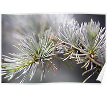 The Colour Grey - Conifers Poster