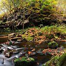 Goitstock Wood by Simon Bowen