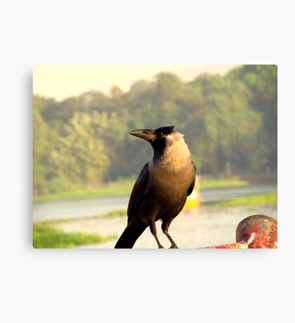 Clever Crow Canvas Print