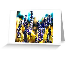 lavender gold Greeting Card