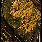 Bridge leaves by apsjphotography