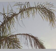 Palm Tree Branches by Léna Sheridan