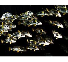 Fish Flying Overhead Photographic Print