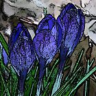 Painted Crocuses~ by Virginian Photography (Judy)