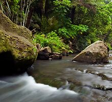 Mokoroa Falls Collection # 8 by Michael Treloar