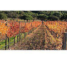 Vineyard Foliage Photographic Print