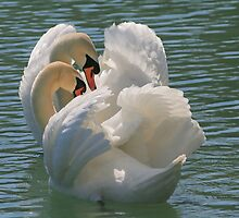 Swan Lake by snaphappyexpat