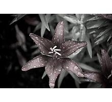 Dark Flower Photographic Print