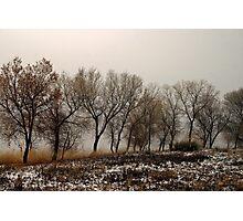 Cottonwoods 1 Photographic Print