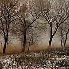 Cottonwoods 2 by David  Postgate