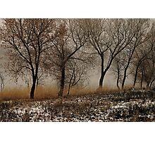 Cottonwoods 2 Photographic Print