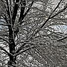 Snow Tree by David  Postgate