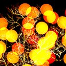 Season of LIghts by Tim Scullion
