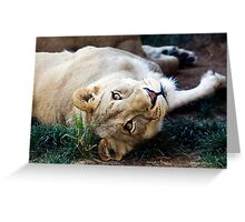 A Lioness Contemplates Her Next Meal Greeting Card