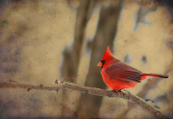 Cardinal on a Branch by Alyce Taylor