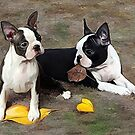 Boston puppies Playing with leaves.. by Cazzie Cathcart