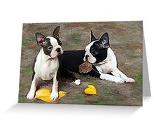 Boston puppies Playing with leaves.. Greeting Card