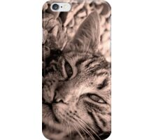 Cat iPhone case iPhone Case/Skin