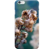Hieracium Lachenalii iPhone Case/Skin