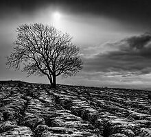 Malham Tree 02 - Yorkshire Dales, UK by ExclusivelyMono