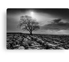 Malham Tree 02 - Yorkshire Dales, UK Canvas Print