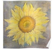 Sunflower at sea Poster