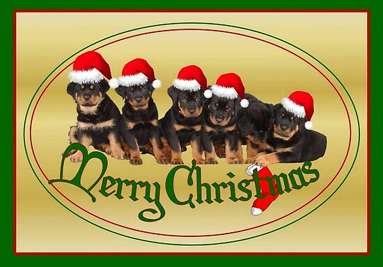 Cute Merry Christmas Rottweiler Puppies by taiche