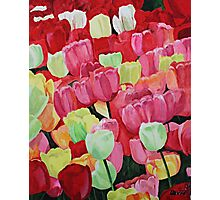 Tulips Photographic Print