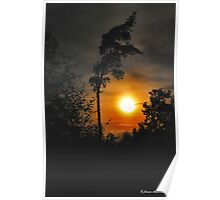 Sunset Tree  Poster