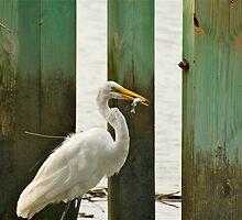Egret Having Some Breakfast by imagetj