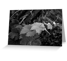 Vine of Alsace Greeting Card