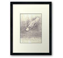 Platypus sketch - pencil Framed Print