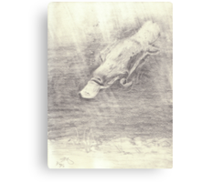 Platypus sketch - pencil Canvas Print