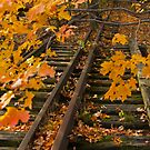 Tracks and leaves by apsjphotography