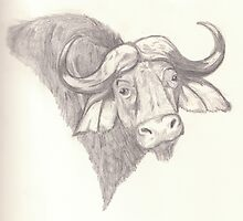Water buffalo portrait - pencil by gogston