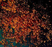 Season(s) by myasha