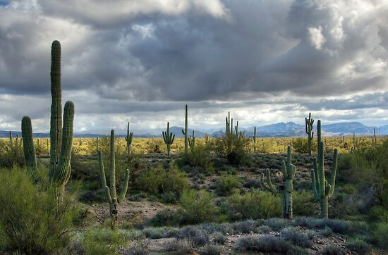 Stormy Desert Morning  by Saija  Lehtonen