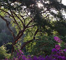 Jungle Tree With Bougainvilleas - Arbol De La Selva Con Buganvillas by Bernhard Matejka