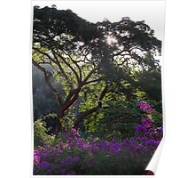 Jungle Tree With Bougainvilleas - Arbol De La Selva Con Buganvillas Poster