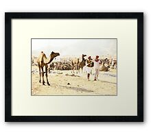 Friends and Camels Framed Print